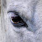 Eyes are the Window by Skye Ryan-Evans
