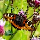 Butterfly and Thistles by lisa1970