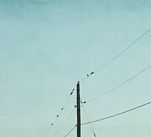 Birds on wires by Suzanne Harford