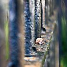 Snail by Jen Wahl