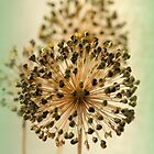 Allium  by karina5