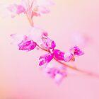 Pink II  by LenkaOBS