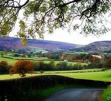 The Road to Farndale by maureen bracewell