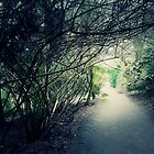 The Way Home by LozMac