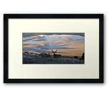 Buck In The Early AM  Framed Print
