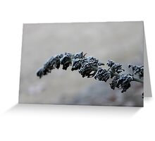 Winter Takes Hold Greeting Card