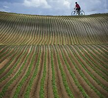 Stripe field by JBlaminsky