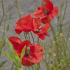 I love poppies by TheaDaams