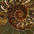 An Ancient Treasure V by JBlaminsky