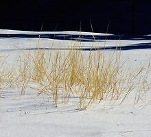 Winter Grass by Gary Benson