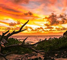 Makapuu Sunrise 4 by Leigh Anne Meeks