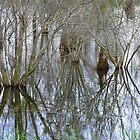 Pond Reflections by Rosalie Scanlon
