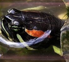 Ribbit! by Marylou Badeaux