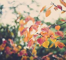 Autumn Colours by Rose Ottley