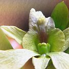 orchid blend by lensbaby