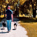 A Man and his Dogs by Brian Gaynor