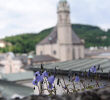 Purple Flowers in Salzburg, Austria by ashleylkunze