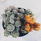 Crazy looking Cacti by Santamariaa