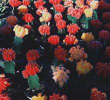 Cactus by Santamariaa