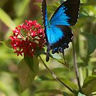 Tropical Blue by Jenny Dean