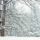 Winter In My Backyard by April Koehler