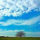 Big Sky by Jamie Lee