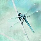 Blue Dragon Fly by Debbra Obertanec