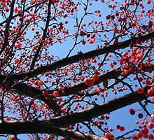 Crabapple Tree by Mary Ellen Tuite Photography