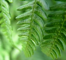 Close-up of Bracken Frond by Richard Winskill