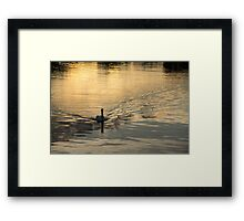 Golden Watercolor Ripples - the Gliding Swan Framed Print
