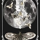 Moth Moon Lantern by historicnature