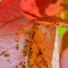 Tiny Bugs by relayer51