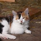 Calico Kitty by AbigailJoy