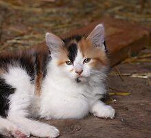 Calico Kitty by AbigailJoy