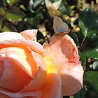 The Rose and the Butterfly by Marilyn Harris