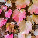 Autumn Leaves - Uralla NSW Australia by Beth  Wode