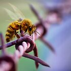Barb Wire Bee by Cliff Vestergaard