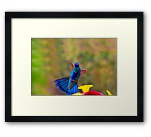 The Old Soft Shoe Framed Print