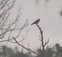 Raven Silhouette by Bethany Helzer