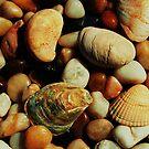 Natures Treasure by Christine Lake