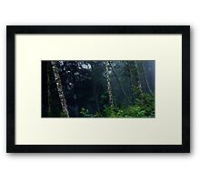 In The Woodland Shade Framed Print