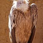 Vulture by Epicurian