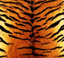 Tiger Skin by fiveminutes