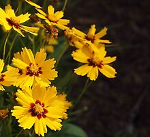 Coreopsis, As-Is by Linda  Makiej Photography