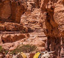 Donkey Canyon by hjblockley