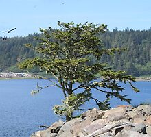La Push Beach with interesting tree by jkmarshall