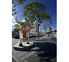 Cows and Trees, Ebrington Square, Derry Photographic Print