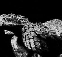 Snake by Rebecca Koller