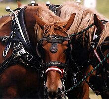 Draft Horses In Harness   by Oldetimemercan