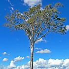 Stately Gum, near Biarra, Queensland by Margaret  Hyde